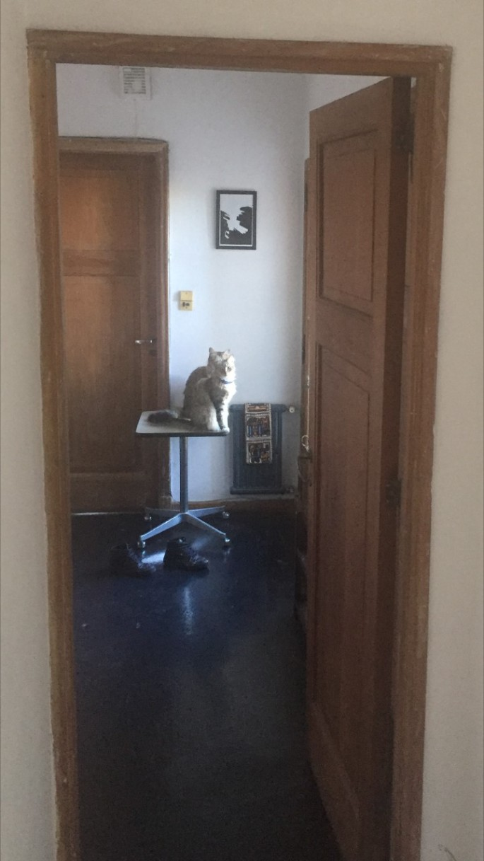 Living with two furry flatmates in trendy Palermo Hollywood